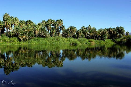 Plan B Viajero, Oasis de San Ignacio, oasis baja california sur
