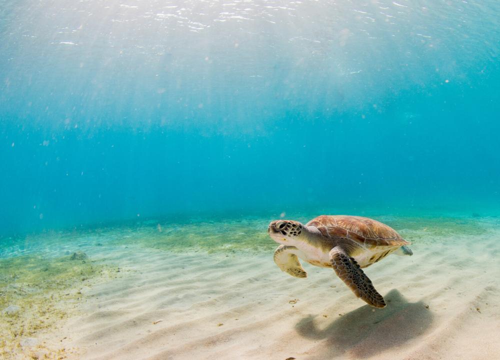 plan b viajero, voluntariado con tortugas marinas en riviera maya