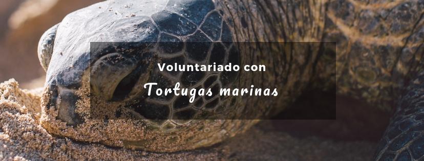 plan b viajero, turismo responsable, voluntariados con tortugas marinas en riviera maya
