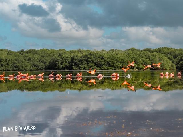 plan b viajero, turismo responsable, flamingo rosados